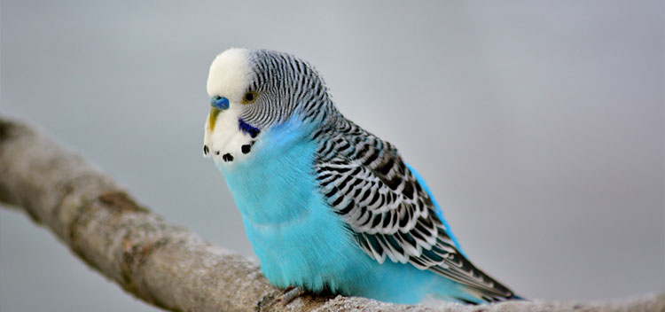 Exporting birds from the UK