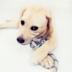 Emma Fisher answers your questions on your puppy's chewing phase