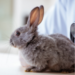 Emma Fisher advises what to look out in your rabbit pre-winter